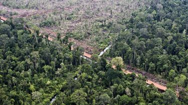 Indonesian rainforest cleared for oil palm plantation