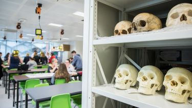 Skulls in Ella Armitage lab