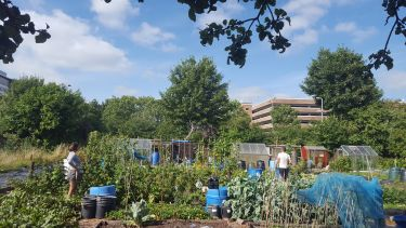 People working on a city allotment in Sheffield on a sunny day. There is a car park in the background.