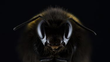 A close up of the face of a bee against a black background