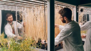 Researchers in plants lab