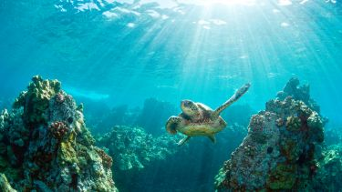 Hawaiian green sea turtle and coral reef with rays of light sunburst in Hawaii