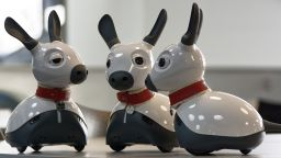 Three Miro robot dogs in a group - image