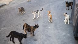 S group of stray cats in the street